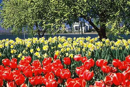 Canberra's calendar includes the Floriade flower festival.